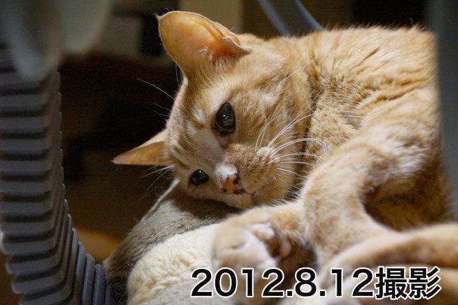 2013.2.13-2.jpg